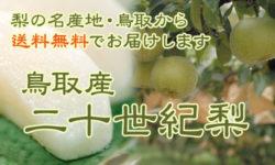 鳥取県産進物用梨